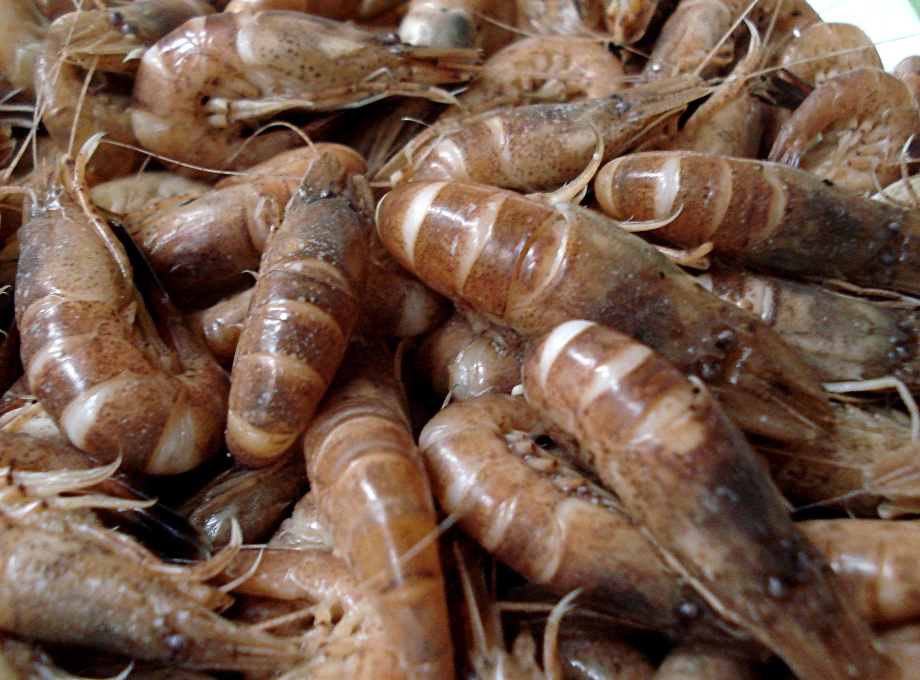 Recette Cuisson Des Crevettes Grises Vivantes